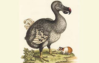 extinct-species-1-dodo